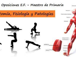 Anatomía y fisiología humanas implicadas en la actividad física. Patologías relacionadas con el aparato motor. Evaluación y tratamiento en el proceso educativo.