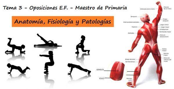 Tema 3 Oposiciones EF Primaria: Anatomía y fisiología humanas implicadas en la actividad física. Patologías relacionadas con el aparato motor. ...