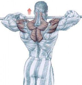 Musculación y ejercicio físico