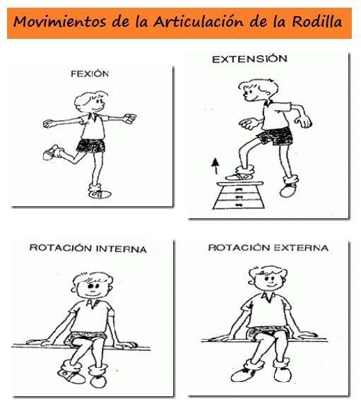 Movimientos de la Articulación de la Rodilla