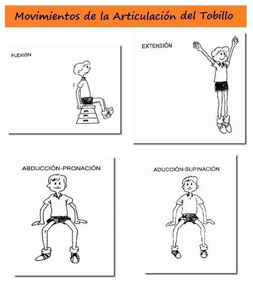 Movimientos de la Articulación del Tobillo