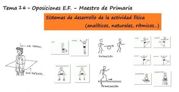 Principios de sistemática del ejercicio y elementos estructurales del movimiento. Sistemas de desarrollo de la actividad física (analíticos, naturales, rítmicos…)