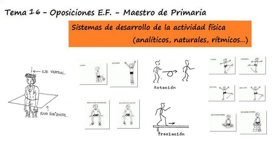 Tema 16: Principios de sistemática del ejercicio y elementos ...