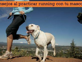 Consejos al practicar running con tu mascota