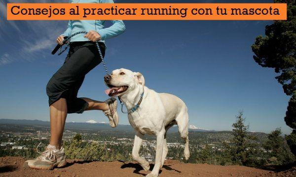 Consejos running con mascota