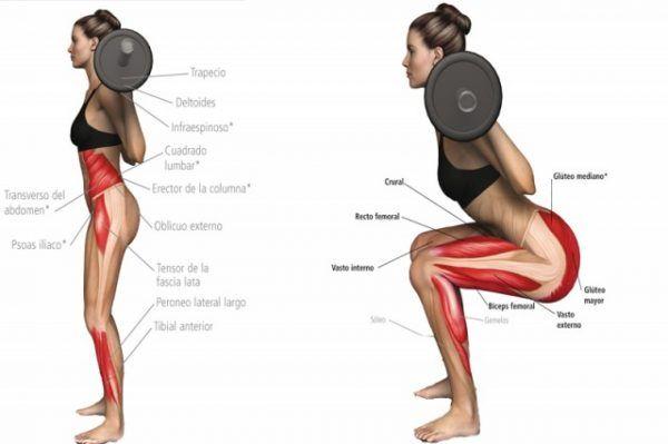 Aumentar musculo piernas y gluteos