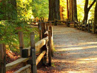 Caminar, Gran Ejercicio para la Ansiedad