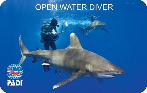 Certificado Padi Open Water Divi
